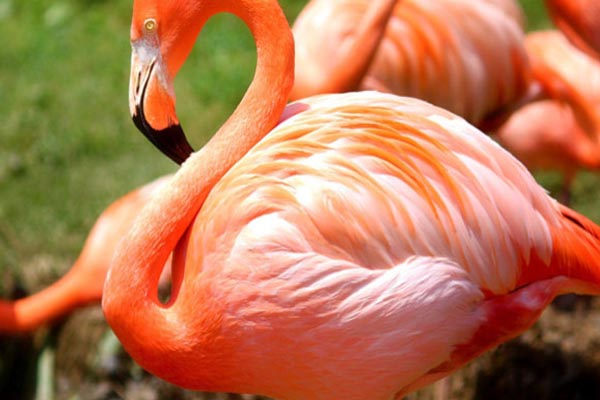 Beautiful Birds Wallpapers found in the world