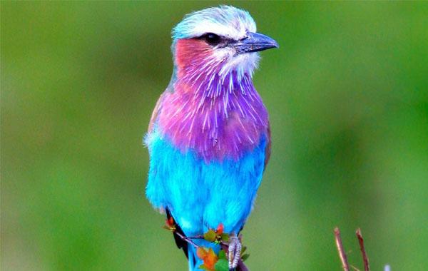 Bird Pictures Amazing Birds: Top 10 Most Beautiful Birds Wallpapers