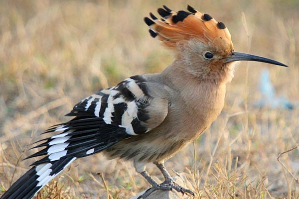 Top 10 Most Beautiful Birds Wallpapers