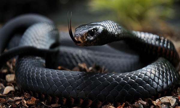 Top 10 most dangerous animals