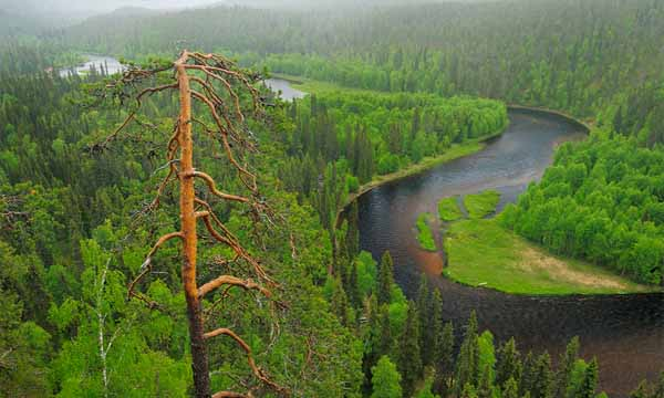 Top 10 Biggest Forests In The World