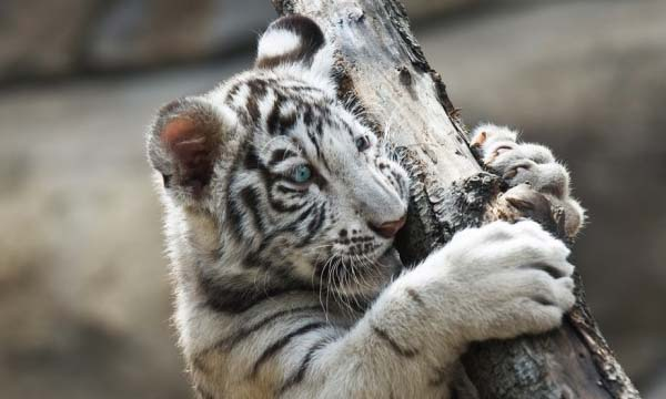 Top 10 Largest Zoos In The World