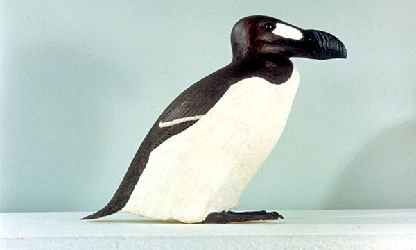 Great Auk Is one of the animal extinct in 21st century