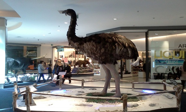 Moa Is one of the extinct animals list