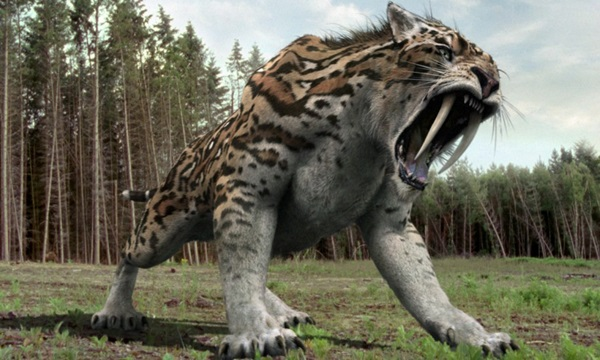 Smilodon Is among ferocious animals to go extinct