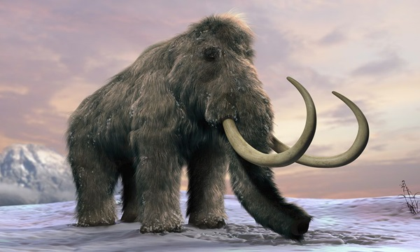 Wooly Mammoth Is one of the strangest extinct animals ever